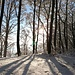 Lichtspiele im Wald II