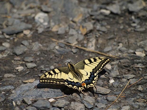 Schmetterling, wo ich keine Ahnung habe, wie er heisst. Aber schön war er... ;-)