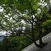... und malerisch im Geröllfeld wachsenden Laubbaum