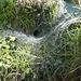 ... an diesem Spinnen-Trichternetz vorbei ...