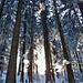 Lichtspiele im Fisteren Wald.