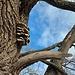 Knorrige Bäume überall