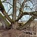 Eine Baum-Krake oder ein Kraken-Baum