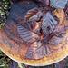 Die Blätter sind ebenfalls durch den Baumpilz gewachsen? Habe nie vorher so was gesehen!