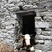 <b>Anche le mucche cercano un po' d'ombra!</b>