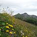Prairie fleurie sur fond de Schwarzhorn
