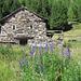 Alpe di Prato Rotondo 1826m