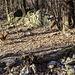 Mufloni in corsa tra le rovine della quota 423 CNS