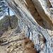 Der Weg ist Steinschlaggefährdet, mehrere Fussgrosse Steine auf dem Weg bestätigten die Warntafeln.