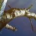 Spiegelung Detail: Baumpilz von unten