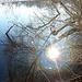 Verwirrspiegelung mit Herz im Baum