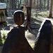 Wood-Art IV  Die Objekte wurden sichtlich alle hier direkt am Baumrest geschnitzt
