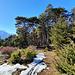 """""""L'arboretum"""" de Loch."""