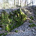 Ruine Neu-Waldeck