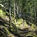 Auf dem weiteren Weg durch den Wald kommt man an einigen Felsen vorbei.