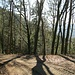 Der Weg hinunter nach Gutach bietet an einigen Stellen Ausblicke, aber sonst keine Besonderheiten.