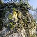 Nun geht es immer oben auf dem Fels entlang und wir tauchen wieder mal ein in eine rustikale Mini-Landschaft aus Granit, Moos und Gehülz, die wir immer so mögen. Auch Schwefelflechten in ihrem leuchtenden Gelb fühlen sich auf dem Stein wohl.