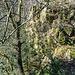 Einige der Baumriesen links und rechts des Grütfelsens überragen diesen mit ihren Kronen sogar.