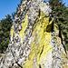 Gipfelporträt: ein bunt beflechtetes Stück Granit bildet sozusagen die Spitze des Grütfelsens.