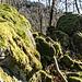 Erneut geniessen wir abwechslungsreiches Auf und Ab zwischen moosbewachsenem Granit und allerlei Botanik. Insgesamt ist diese Rippe aber nicht so schroff und exponiert wie der Grütfels zu Beginn der Tour.