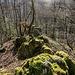 Die Rippe verliert sich nach einigenTurnübungen schliesslich in einem Mini-Grat, der gerade noch so aus dem Waldboden herauslugt :-)