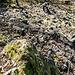 Den Fuß des ersten Aufschwungs bildet wieder eine brombeer-überwucherte Schutthalde und Obacht ist auf einigen wackeligen Steinen angesagt.