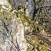 Gut gestuft geht es in den mal blanken, mal bemoosten Granit hinein.