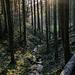 ... begleitet vom plätschernden Welschbollenbach. Nach einer Waldpassage, die von der tiefstehenden Sonne illuminiert wird, wartet dort unser Wagen auf uns.