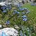 Blumenpracht am Murtatöl