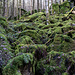 Eine wunderschöne Märchenwald-Stimmung, obwohl ich hier auf einem ganz profanen, breiten Wirtschaftsweg wandere.
