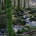 Die Grimbach-Wasserfälle sind kein Fallstufen-Wunder, sondern eher eine Folge kleiner Kaskaden, aber auch damit ein durchaus sehenswerter Anblick: laut rauschend durchfliesst der Bach im dunklen Tann einen Hindernis-Parcour aus moos-bewachsenen Felsblöcken.