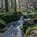 Quellgebiet ist das Kar am Mittelfeldkopf (938 m), der zum Höhenzug der Badener Höhe (1002 m) gehört. <br />Hier drehe ich um und gehe am Wasser entlang wieder runter zum Forstweg.
