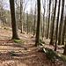 Bergab durch lichten Buchenwald