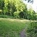 Der Weg führt vom Buessberg über eine kleine Lichtung bis hinauf auf den Lägerngrat.