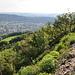 Blick vom Grat hinab zum Buessberg - gut erkennbar, dass es sich geologisch um eine abgeglittene Schicht handelt.