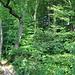 Hier verschwindet der Grat. Der Weg geht über das Wettinger Horn (rechts oben im Wald) und den Lägernsattel in Richtung Burghorn. Erst vor dem Burghorn wird der Grat wieder erkennbar.