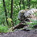 """Felsblock am Wettinger Horn. Unterhalb dieses Felsblocks befindet sich der unter dem Begriff """"Südsporn"""" von [u ironknee] unter dem Titel [http://www.hikr.org/tour/post2649.html Geheimpfade] beschriebene Kraxelhang, der sich hinab bis ca. 650 m ü. M. zieht."""