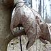 Greifende Blätterhand