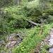Urige Brücke nach der Wasseralm
