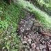 Beim Abstieg ins Fischunkel glich der Steig meist mehr einem Bach als einem Weg