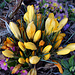 Herrliches Bouquet a la nature