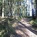 Man folgt dem Weg zum oberen Waldrand.