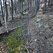 """Le long du sentier traversant la Telwald, on peut apercevoir ce genre de """"châble"""" qui permettait de faire descendre des tronc d'arbre jusqu'en plaine mais aussi, probablement avant la construction du funiculaire, des chargements de pierres ollaires à l'aide de schlitte."""