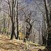 Nackte Kastanienwälder