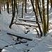 Winter im Kempter Wald.