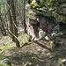 Wieder an der Kletterstelle, Blick hinab. Wie steil und rutschig es ist, sieht man auf dem Foto nur unvollkommen. Echte Bergsteiger würden allerdings hier nur müde lächeln ...