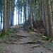 Wurzelweg hinauf zum Sommersberg