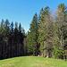Rückblick auf den Waldausgang beim Sommersberg