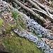 Funghi saprofiti su un tronco sul versante che sale alla grotta.