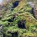 schön rinnt das Wasser auch über diese moosige Felsstufe